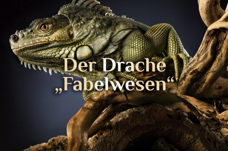 Fabelwesen Drache 🐉 Drachen Arten 🐉 Der Drache