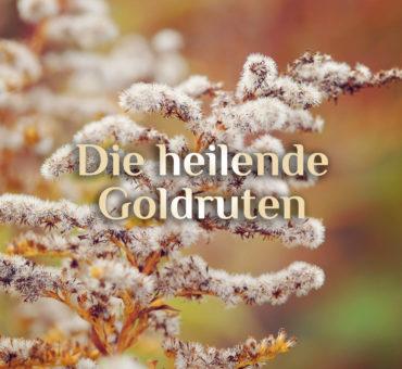 Heilende Goldrute 👱🏻♀️ Goldrute Haartonikum 👱🏻♀️ Rezept Goldruten-Tonikum