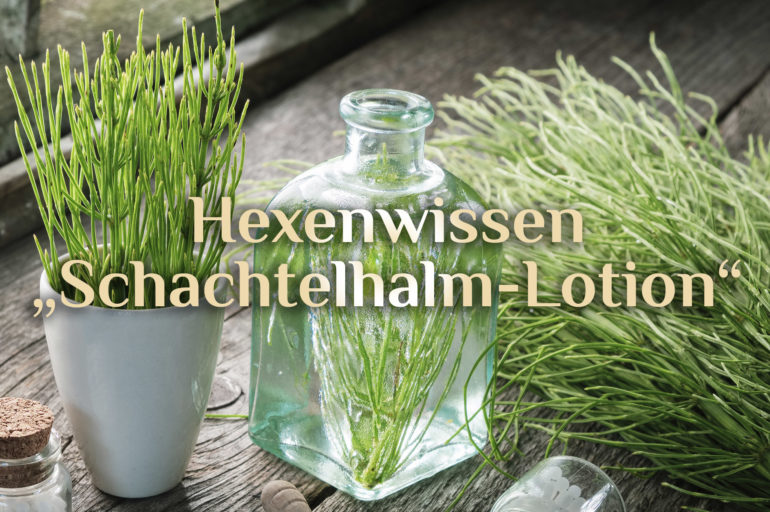 Schachtelhalm Haut-Lotion 🌿 Rezept Schachtelhalmlotion 🌿 Hexenwissen Schachtelhalm