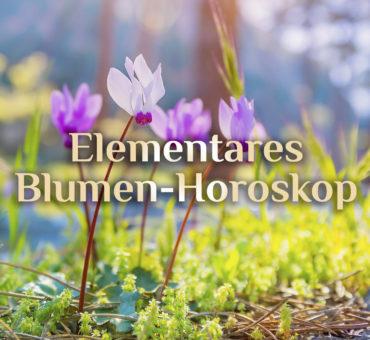 Blumen Horoskop 🌼 Horoskop der Blumen 🌹 Blumenhoroskop 🌷