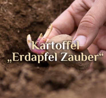 Kartoffel Zauber | Magische Kartoffel | Rituale rund um den Erdapfel