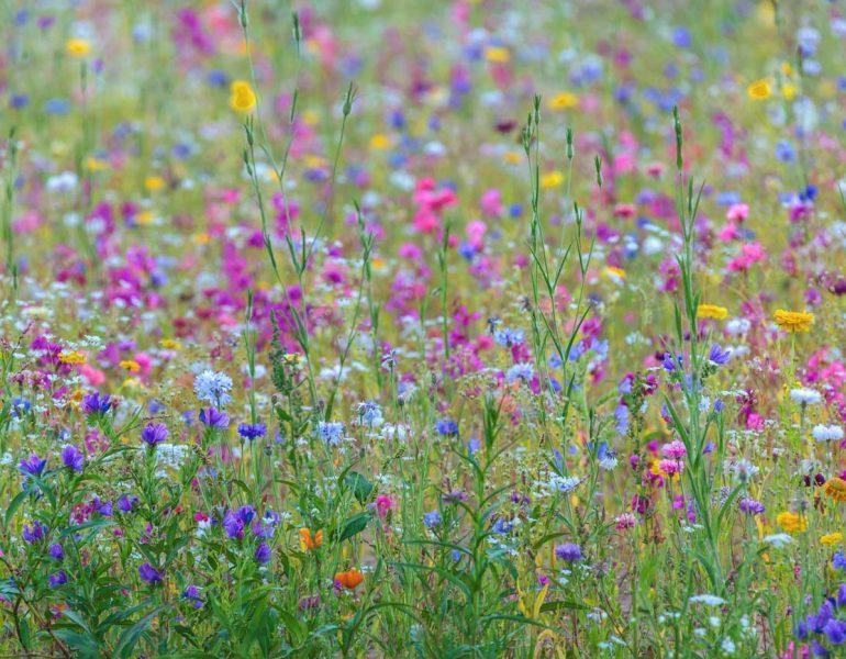Allergie behandeln   natürliche Hilfsmittel bei Allergie   natürliche Mittel gegen Allergie