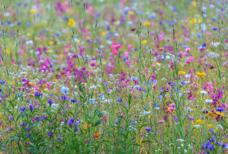 Allergie behandeln | natürliche Hilfsmittel bei Allergie | natürliche Mittel gegen Allergie