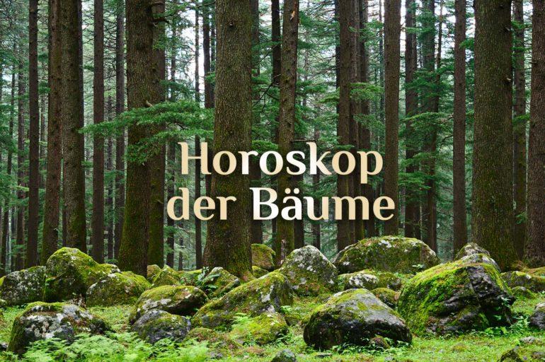 Dein Baumhoroskop | 🌳 Horoskop der Bäume 🌲| Keltisches Baum-Horoskop