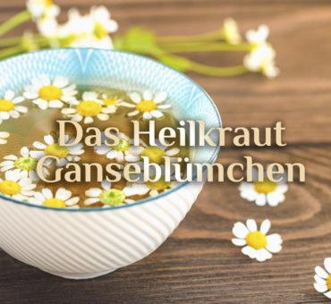Heilkraut Gänseblümchen 🌼 Gänseblümchen Hautöl 🌼 Gänseblümchen Hausmittel
