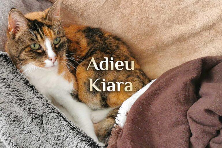 Adieu Kiara 🐈 Ich vermisse Dich unendlich